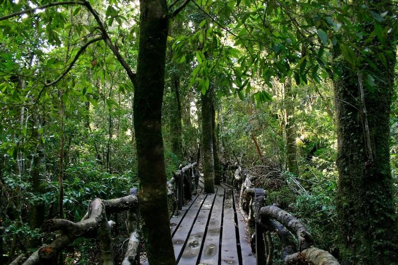 El cambio climático (Selva Patagónica)