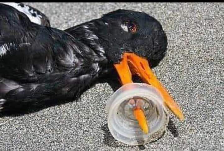 Contaminación ambiental en fotos